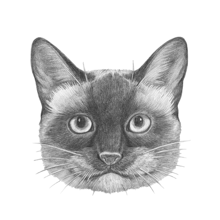 Portrait of Siamese  Cat. Hand-drawn illustration.