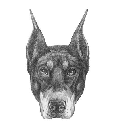 Portrait of Doberman Pinscher . Hand drawn illustration. 写真素材