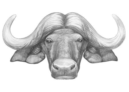 Portrait of Buffalo. Hand-drawn illustration. Stock Photo