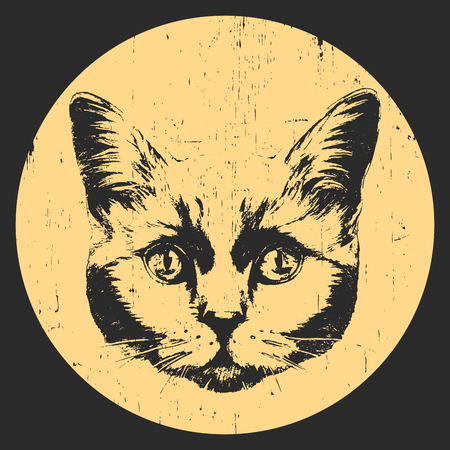 Portrait of British Shorthair Cat. Hand drawn illustration. Vector.