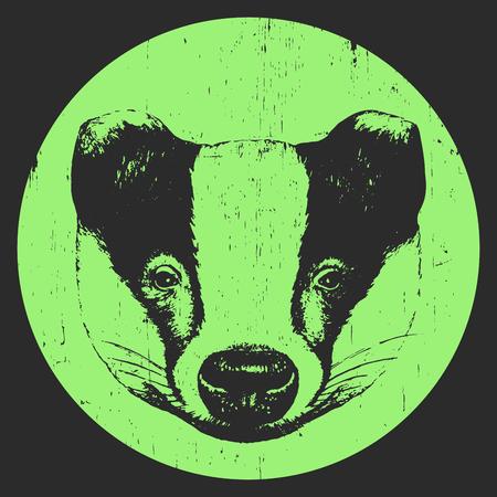 Portrait of Badger. Hand-drawn illustration. Vector