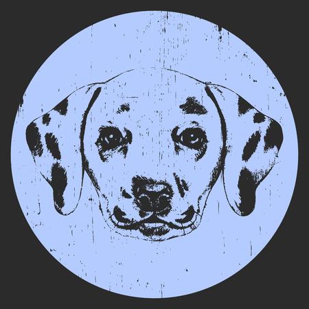 Portrait of Dalmatian Dog. Hand drawn illustration. Vector