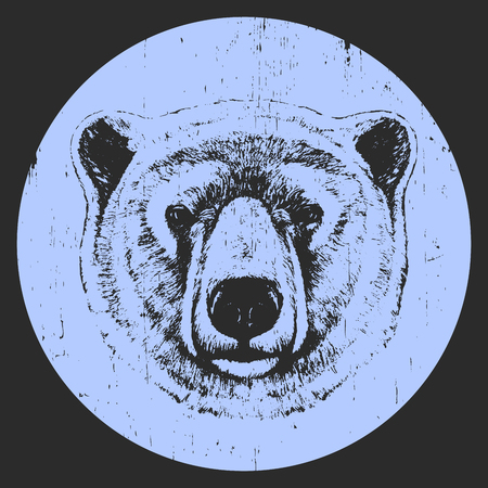 Portrait of Polar Bear. Hand drawn illustration. Vector Çizim