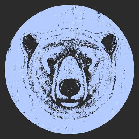 Portrait of Polar Bear. Hand drawn illustration. Vector Illustration