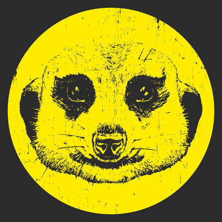 Retrato de suricata. Ilustración dibujada a mano. Vector Ilustración de vector