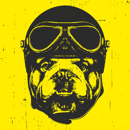 Portrait of English Bulldog with Vintage Helmet. Vector