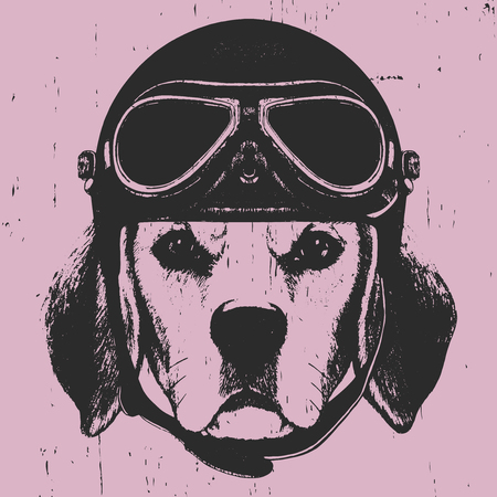 Portrait of Beagle with Vintage Helmet. Vector