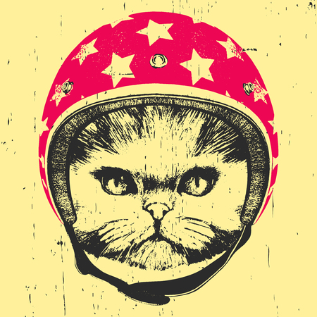 Portrait of Persian Cat with Helmet. Vector