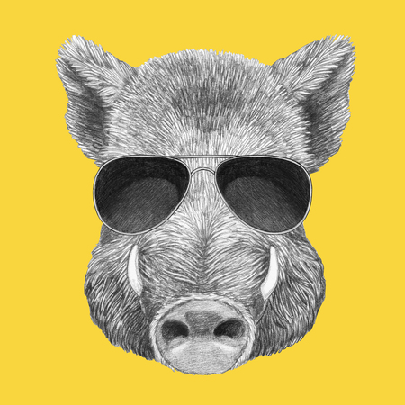 Portrait of Boar with sunglasses, hand-drawn illustration
