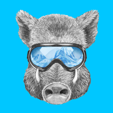 Portrait of Boar with ski goggles, hand-drawn illustration