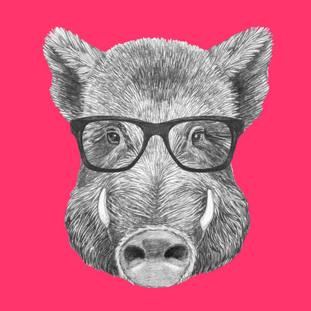 Portrait of Boar with glasses, hand-drawn illustration Stock Photo