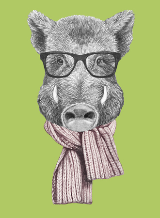 Portrait of Boar with glasses and scarf. Hand-drawn illustration.