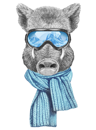Portrait of Boar with goggles and scarf. Hand-drawn illustration.