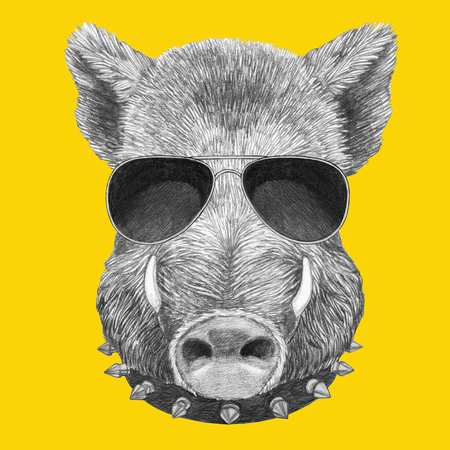 Portrait of Boar with glasses and collar. Hand-drawn illustration.