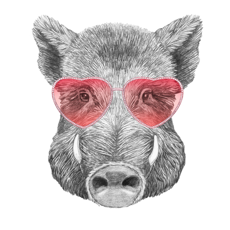 Boar in Love! Portrait of  Boar with sunglasses. Hand drawn illustration.
