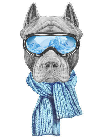 Portrait of Pit Bull goggles and scarf. Hand-drawn illustration.