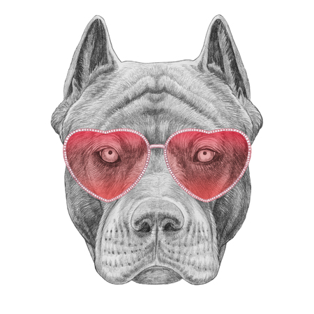 Pit Bull in Love! Portrait of Pit Bull with sunglasses. Hand drawn illustration.