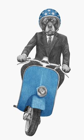 Rottweiler rides scooter. Hand drawn illustration. 写真素材