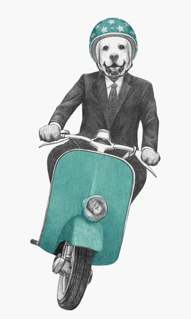 Labrador rides scooter. Hand drawn illustration.