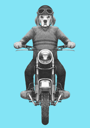 Beagle rides motorcycle. Hand-drawn illustration.