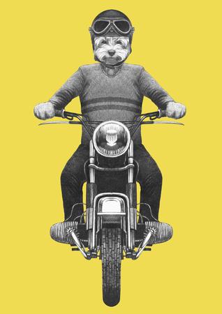 Maltese Poodle rides motorcycle. Hand-drawn illustration.