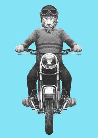 Tiger rides motorcycle. Hand-drawn illustration. 写真素材