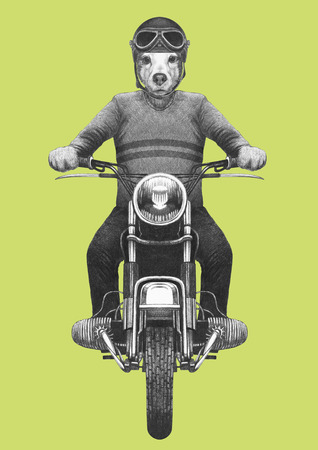 Jack Russell rides motorcycle. Hand-drawn illustration. 写真素材