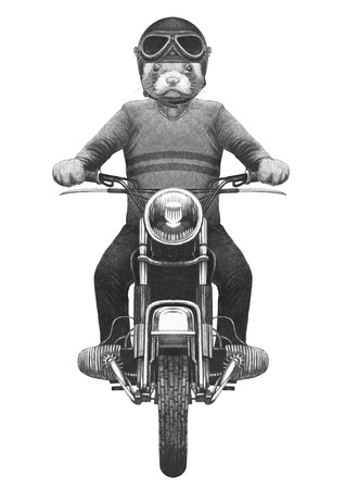 Least Weasel rides motorcycle. Hand drawn illustration. Stok Fotoğraf
