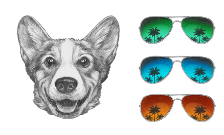 Portrait of Pembroke Welsh Corgi with mirrored sunglasses. Hand-drawn illustration. Foto de archivo