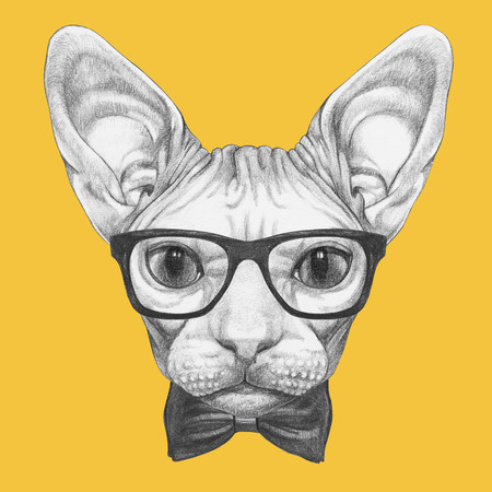 be118f56f6876 Portrait of Sphynx Cat with glasses and bow tie. Hand-drawn illustration.  Stock