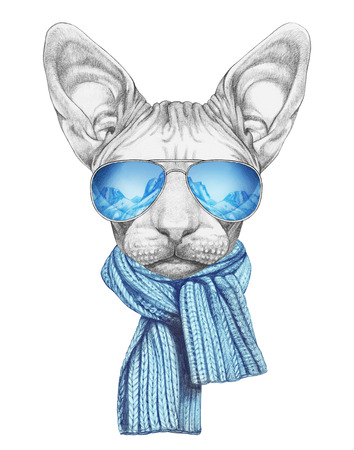 Portrait of Sphynx Cat with sunglasses and scarf. Hand-drawn illustration. 写真素材