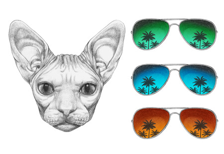 Portrait of Sphynx Cat with mirrored sunglasses, hand-drawn illustration Stock Photo