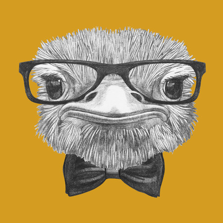 Portrait of Ostrich. Hand-drawn illustration.