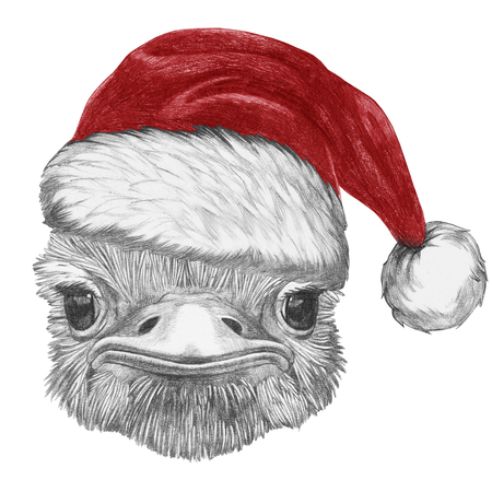 Portrait of Ostrich with santa hat. Hand-drawn illustration.