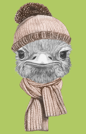 Portrait of Ostrich with hat and scarf. Hand-drawn illustration.