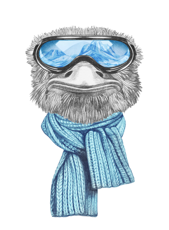 Portrait of Ostrich with goggles and scarf. Hand-drawn illustration.
