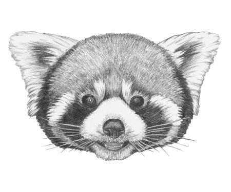 Portrait of Red Panda, hand-drawn illustration Stok Fotoğraf