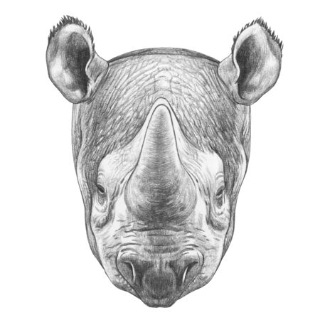 Portrait of Rhinoceros, hand-drawn illustration