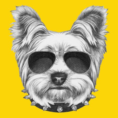 Portrait of Yorkshire Terrier with sunglasses and collar, hand-drawn illustration