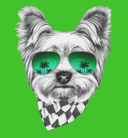 Portrait of Yorkshire Terrier, hand-drawn illustration