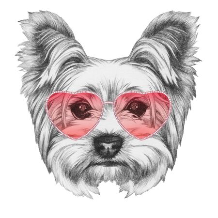 Dog in Love! Portrait of Yorkshire Terrier, hand-drawn illustration 写真素材
