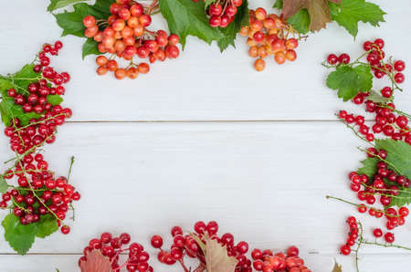 Frame of red berries of red currant, viburnum, mountain ash on a white wooden background with copy space. Back to school