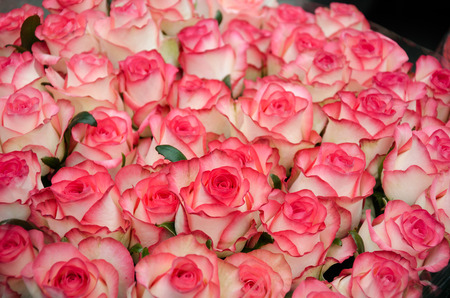 beautiful bouquet of pink roses to your loved ones prazniki, birthday, valentines day, wedding