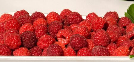 delicious red raspberries in a white tray with green leaves