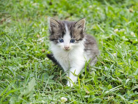 Summer in the garden is a very small beautiful kitten with blue eyes