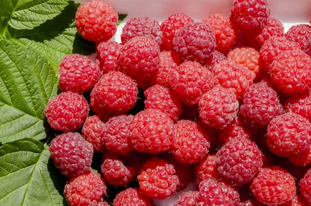Useful vegetarian vitaminized food, ripe aromatic raspberry, close-up  Banco de Imagens