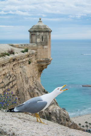 Screaming seagull near the ancient castle Santa Barbara above the beach and a view to Mediterranean sea in Alicante, Spain. Stock Photo