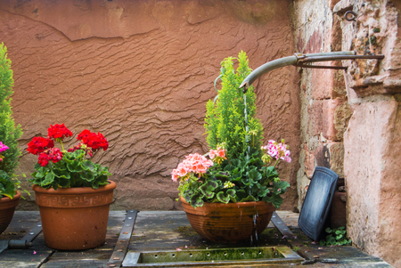 Water pouring out of the hose in the courtyard of the old house and pots with pink and rose flowers standing over the stone pavement, Heidelberg, Germany.
