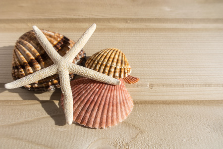 Bright wooden background with a collection of sea shells at the side, yellow, pink, white and broun shells of different shapes and sizes and white starfish. Abstract composition of summer vacation. 免版税图像