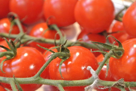 Close-up of red fresh organic bio farm small cherry tomatoes on a branch, background with selected focus of vegetables at the street city roadside weekend market. Healthy local food. Stok Fotoğraf